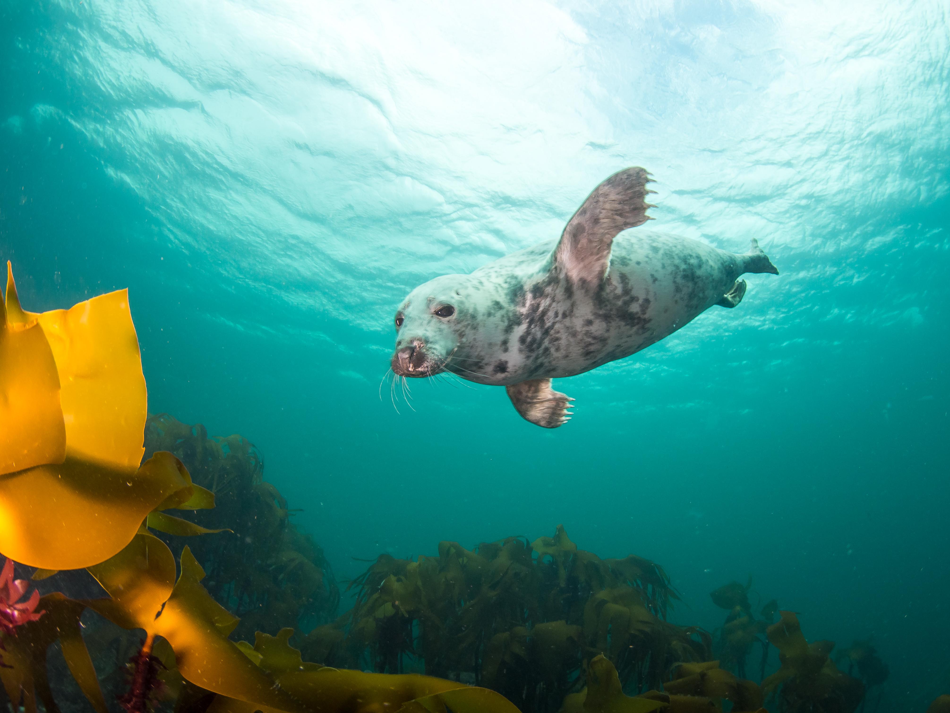 Volg een opleiding in duiken en vele andere specialisaties